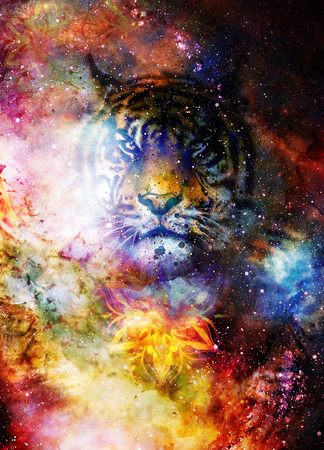 magical space tiger and mandala, multicolor computer graphic collage.