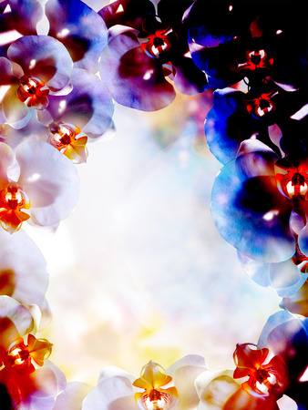 bloem op abstracte kleurenachtergrond. Orchidee.