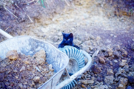 tiny black kitty playing with garden wheelbarrow.