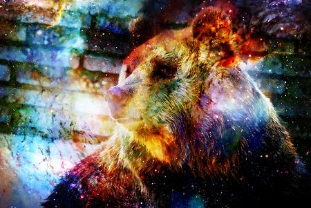 공간에 거대한 곰. 그래픽 효과가있는 사진. 컴퓨터 콜라주입니다. 우주 공간. 스톡 콘텐츠