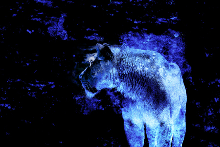lioness and graphic effect. Computer collage. Blue color. 版權商用圖片