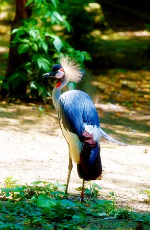 Beautful bird. Blur nature background. Color bird. Stock Photo
