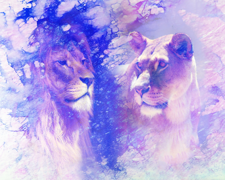 Lion couple - lion and lioness, on abstract structured background. marble effect.