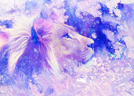 young lion face, profile portrait on abstract structured background.