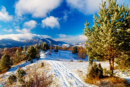 Beautiful mountain snowy landscape and forest path. Beautiful sunny day in the mountains. Stock Photo