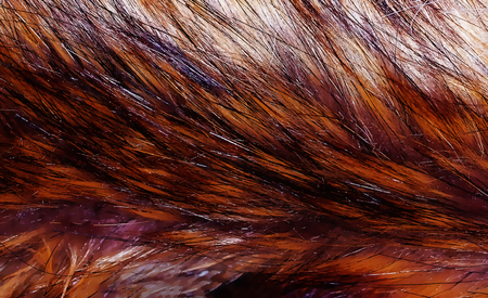 different structures and shades of fur - artificial fur texture. Stock Photo