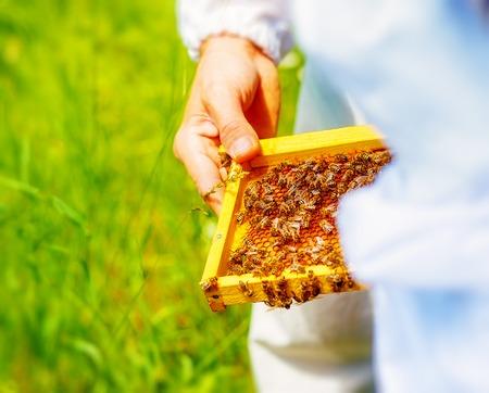 Beekeeper manipulating with honeycomb full of golden honey.