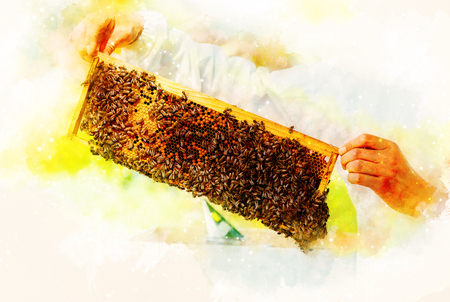 Beekeeper manipulating with honeycomb full of golden honey on softly blurred watercolor background.