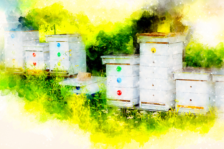 White hives of bees in the apiary and softly blurred watercolor background.