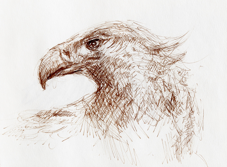 sketch of an eagle head on a paper. Stock Photo - 119015941
