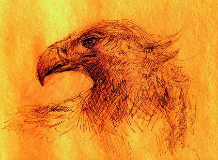 sketch of an eagle head on a paper. Color effect.