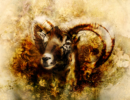 Drawing of male wild sheep with mighty horns on flower background.