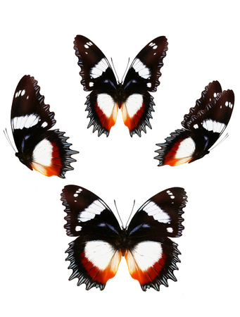 butterfly on white background. Set butterfly.