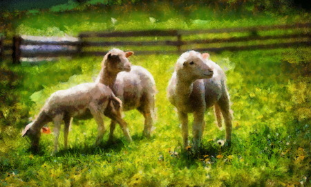 Little lambs grazing on a beautiful green meadow with dandelion. Computer painting effect.