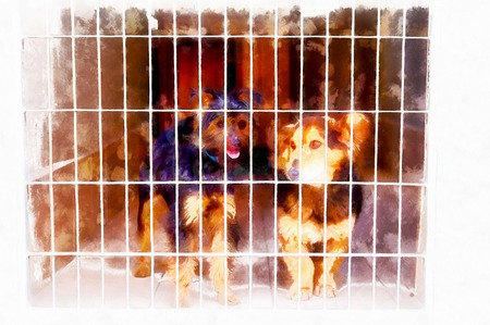two cute strayed dogs in dog shelter and computer painting effect.