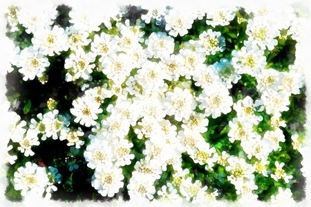 beautiful white garden flowers and blur background and computer painting effect. Stock Photo