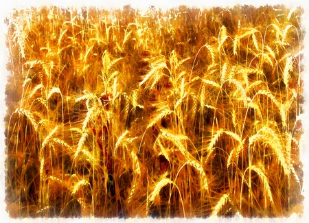 grain field, brown structure and computer painting effect.
