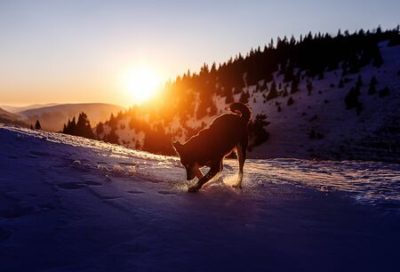 dog playing on the snow on mountains at sunset, computer painting effect Stock fotó