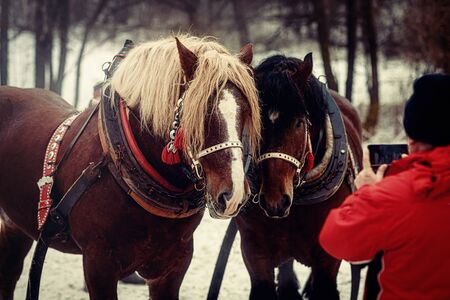 two horses posing to photographer