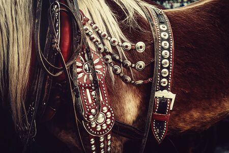 horse with ornate harness in close-up view