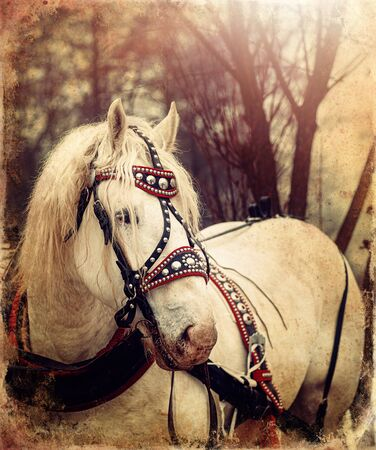 Beautiful work horse in nature, old photo effect.