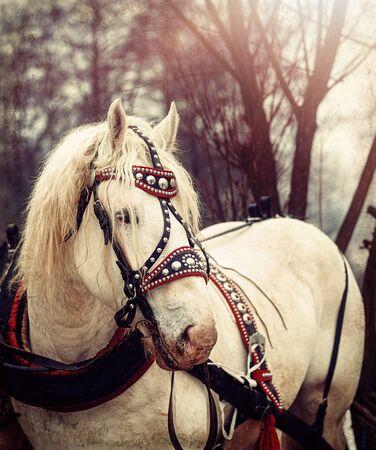 Beautiful work horse in nature