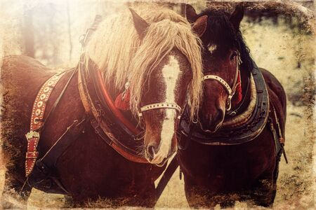 Two horse portrait close up in love, Horse love, old photo effect
