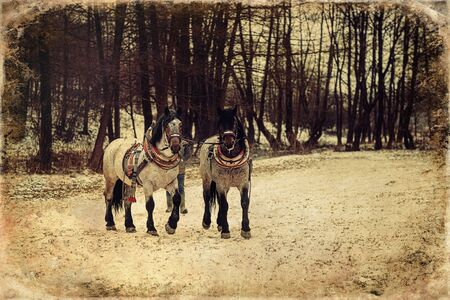 Two horses with ornate harness, old photo effect 스톡 콘텐츠