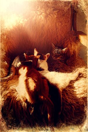 cat mother lies on fur, and two young cat old photo effect Banque d'images