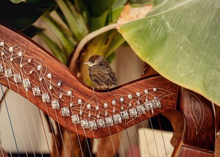 Irish harp and smal bird. Instrument closeup