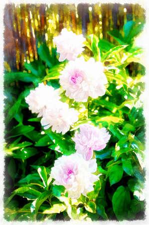 beautiful pink floral peonies blooming, green background. Painting effect. Standard-Bild