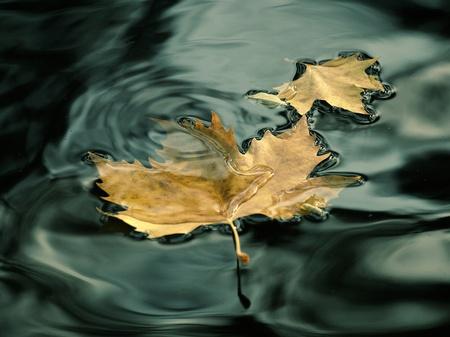 Love leaf  photo