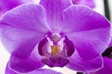 upclose: Orchid flower up-close