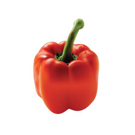 Red pepper vegetable icon. Illustration