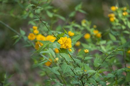 Yelow Flower Beauty