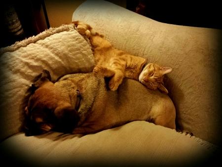 buddies: Snuggle Buddies
