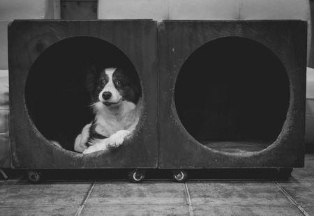 cubby: Dog in a cubby Stock Photo