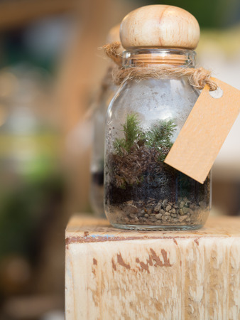terrarium: Out of focus terrarium, small tiny tree in a small glass bottle on a wooden shelf