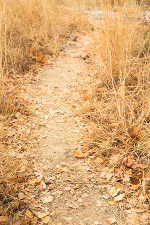 walk path: Walk path in the jungle - dry grass field, autumn season Stock Photo