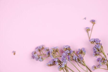 Cute little purple caspia flower on pastel pink background Stok Fotoğraf