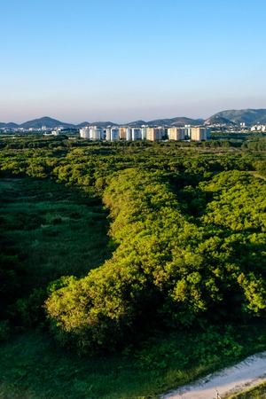 Forest landscape with hill in  the background, near Vila Panamericana, on a clear afternoon. Barra da Tijuca, Rio de Janeiro. Stock Photo