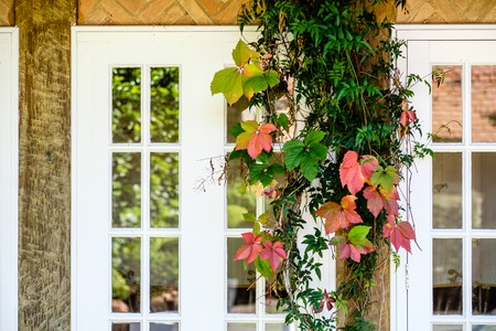 Colorful leaves in fall near a windowsill with white frame in beautiful light