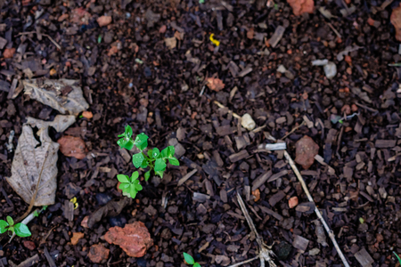 green leaves growing from the bare earth, being bathed in light, blurred background, beautiful wood and earth texture Stock Photo