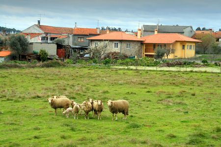 sheepfold: country landscape with houses and sheeps Stock Photo