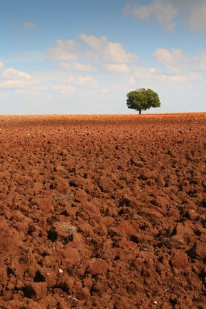 Alentejo Landscape Stock Photo - 2923587