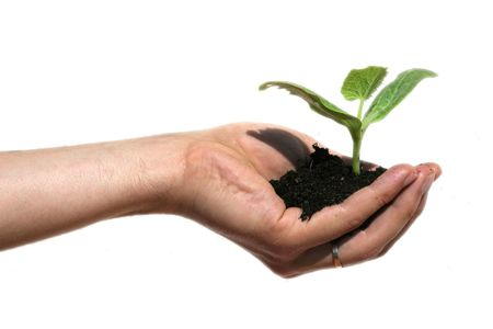 earth protection theme (hand with plant) Stock Photo