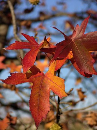 nice and cold autumn landscape Stock Photo - 3581111