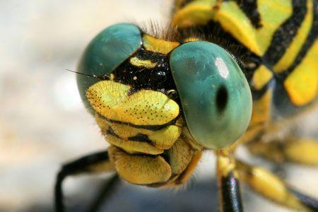 antrey: extreme closeup of dragonfly Stock Photo