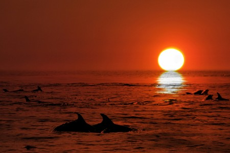 Dolphin in the blue ocean Stock Photo - 3983001