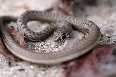 brown snake in the nature Stock Photo - 4492340